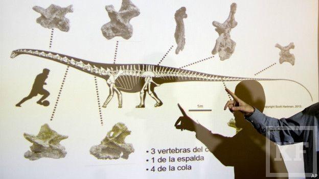 В Аргентине обнаружен скелет самого большого в мире динозавра