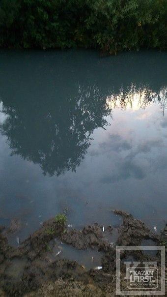 СКР готов передать в суд дело о массовой гибели рыбы в Елабужском районе