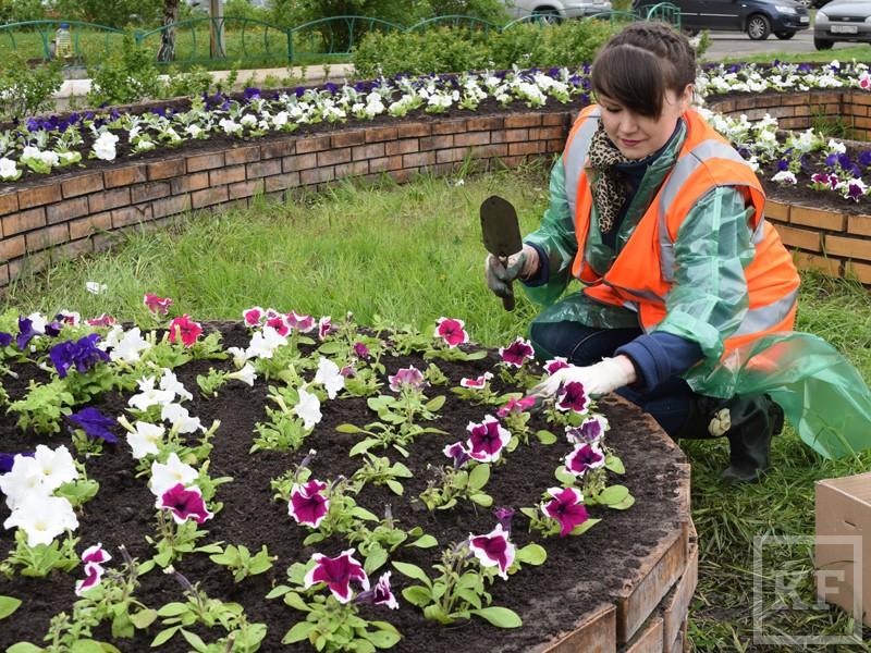 В семи скверах Казани высадят 45000 цветов