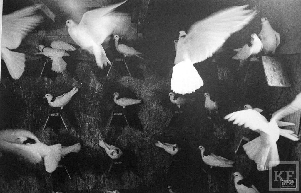 Выставка «8,5 квадратных метров фотографий» в «Смене»