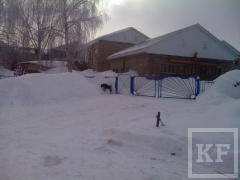 Территорию детсада в Лениногорске оккупировали бродячие собаки — «Народный контроль»