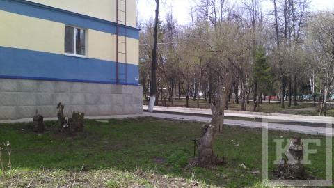Житель Лениногорска просит посадить деревья у его дома вместо спиленных