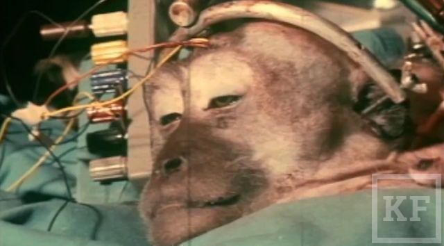 Ученые обосновали возможность пересадки головы [видео]