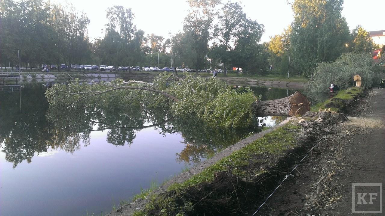 Дамир Фаттахов об очередном скандале в парке Урицкого: «Беговые дорожки будут восстановлены, а тяжелой технике запретили въезд на эту территорию»