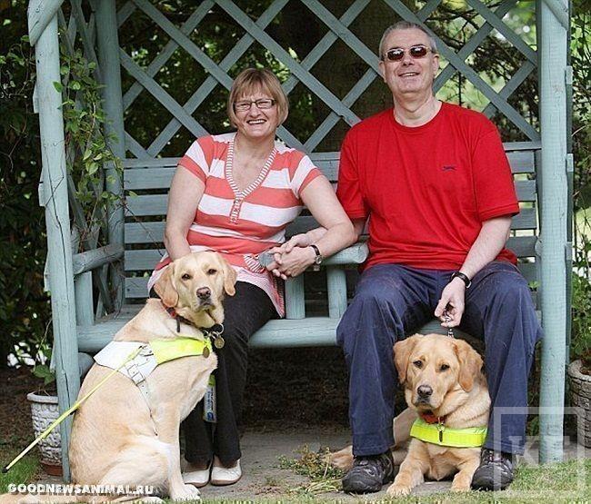 Собаки-поводыри поженили своих слепых хозяев [фото]