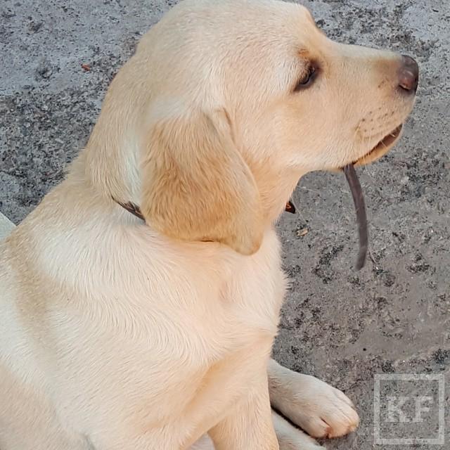 Instagram Минниханова: как зовут щенка президента?