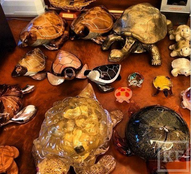 Рустам Минниханов поделился в instagram фотографиями своей коллекции черепах