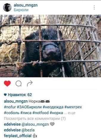 Европейские зоозащитники требуют закрыть звероферму по производству шуб в Высокогорском районе