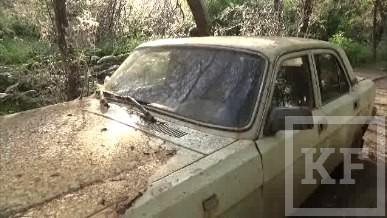 Нашествие гусениц в Казани: личинки оккупировали дворы, деревья и машины