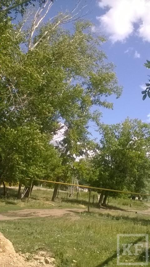 В Лениногорском районе на людей угрожают упасть трухлявые тополя — «Народный контроль»