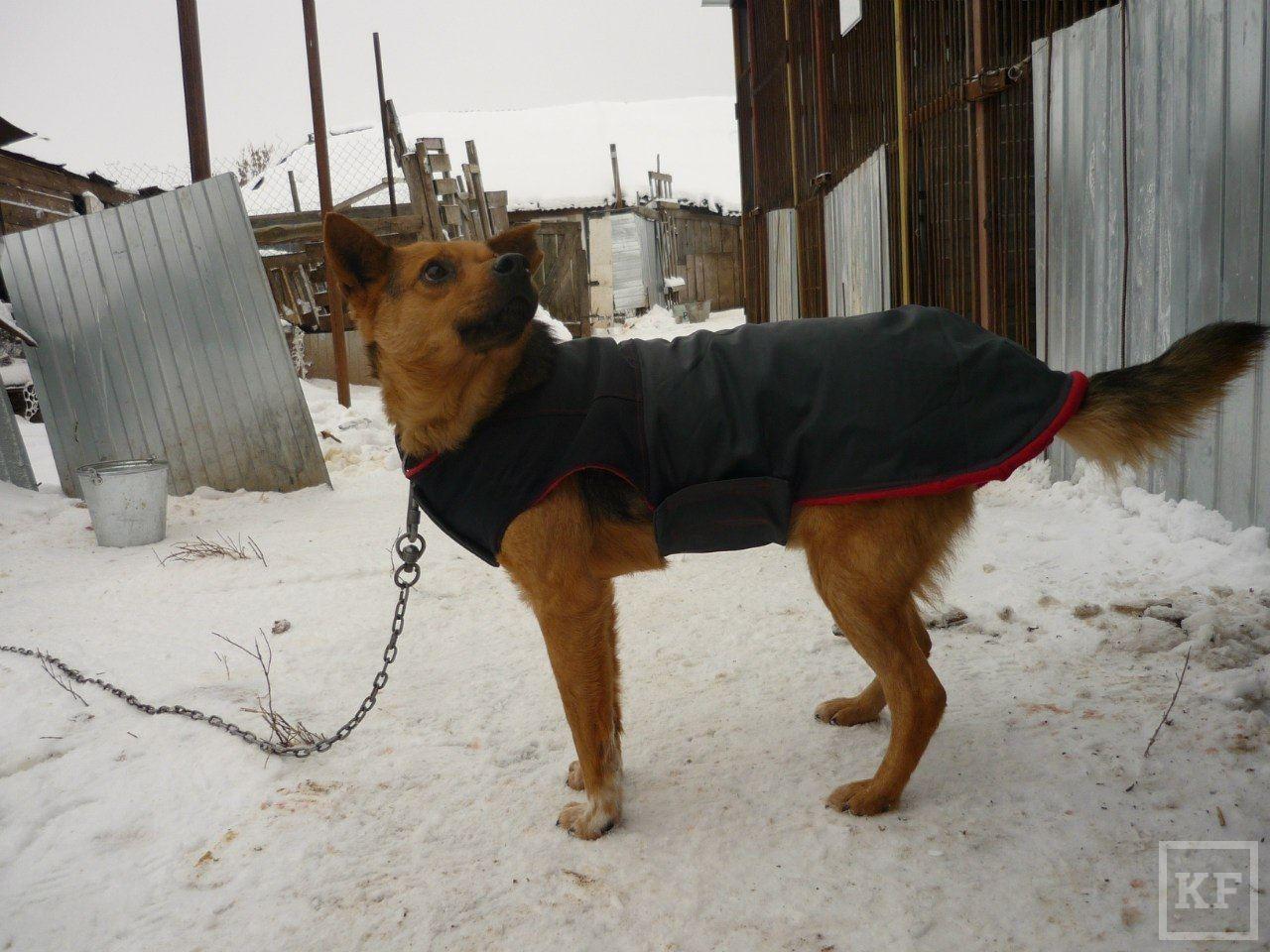 Как избавиться от бездомных собак во дворе и на даче