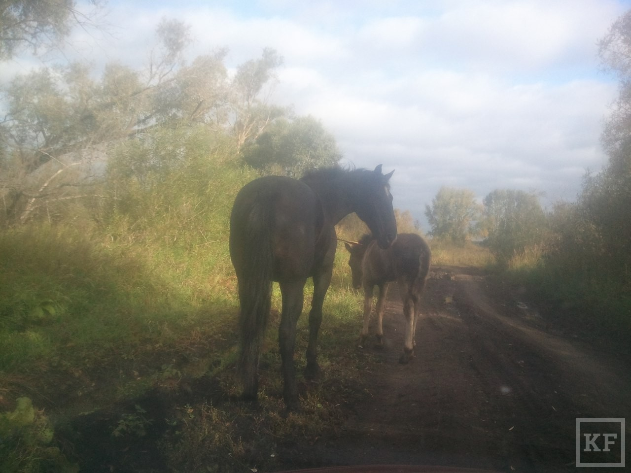 В Нижнекамске неизвестные подстрелили лошадь из арбалета