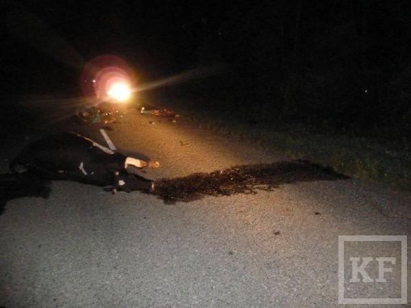Мотоциклист сбил корову и погиб [фото]