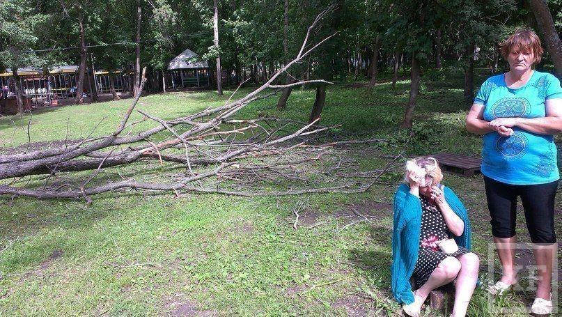 В Алексеевском районе на женщину с ребенком упало дерево