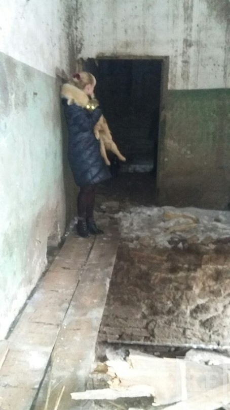 В Елабуге неизвестный выбросил щенков в яму у бывшего приюта для бездомных животных