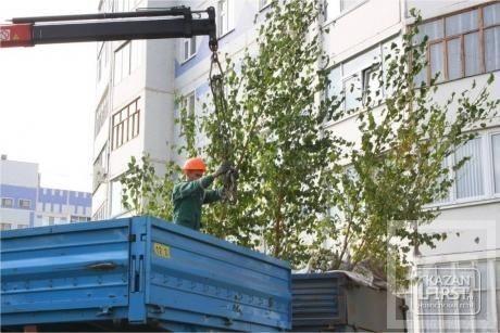 Победная акция: сажать деревья в Нижнекамске будут ветераны войны и труда