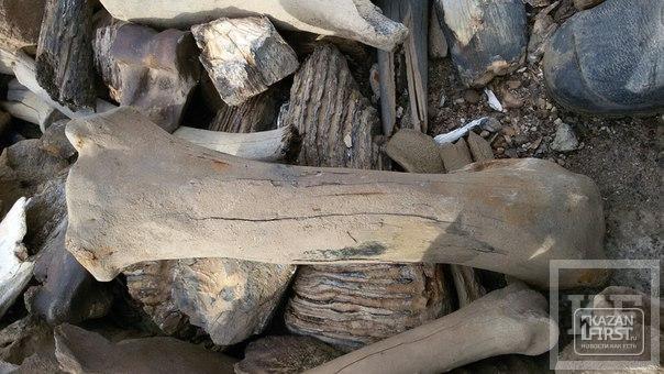 На одном из заводов Челнов рабочие обнаружили останки, предположительно, мамонта