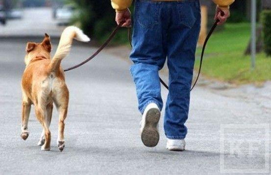 В Татарстане детям запретят выгуливать собак