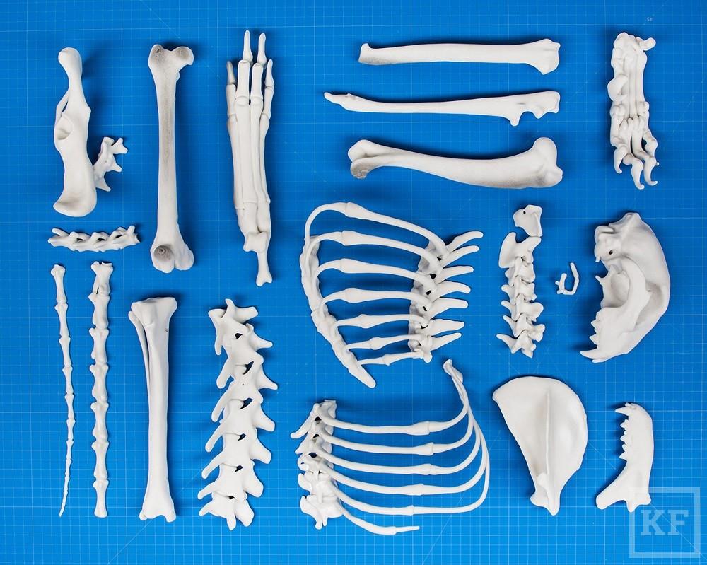 09.Cheetah parts printed