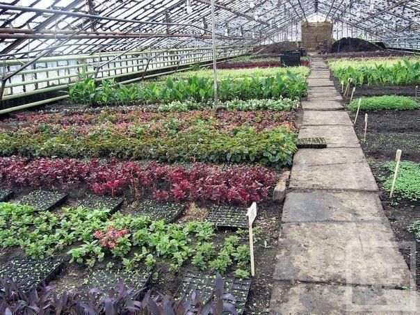 Чтобы посадить  цветы на улицах Нижнекамска, требуется реконструкция теплиц