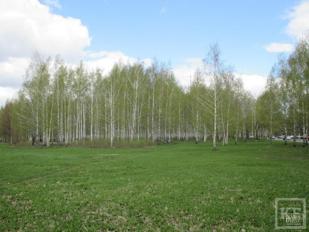 Кто поможет парку Нижнекамска