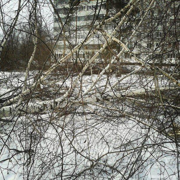 В Челнах в центре города вырубают деревья под строительство торгового центра