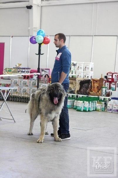 Выставка собак прошла в Набережных Челнах
