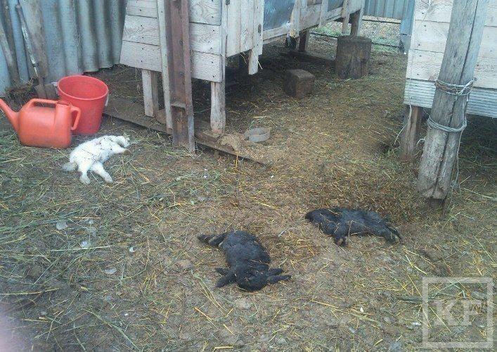 В Татарстане произошло очередное нападение чупакабры