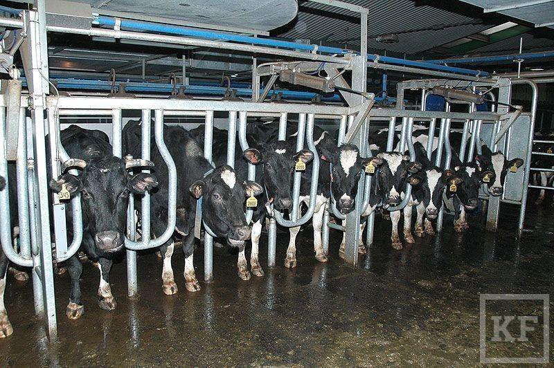 Зачем Сбербанк опять кредитует молочное производство
