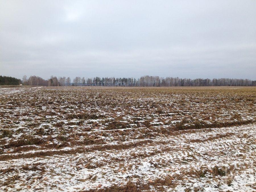 На полях Елабужского района замерзают овощи