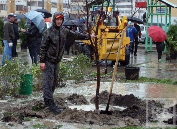 Год парков и скверов: мэрия пересчитает все деревья в Казани