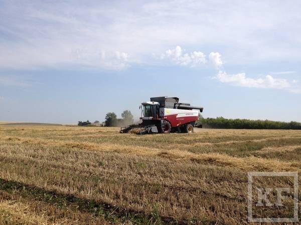Сельскому хозяйству нужна модернизация, но как ее провести, сдерживая рост цен на товары