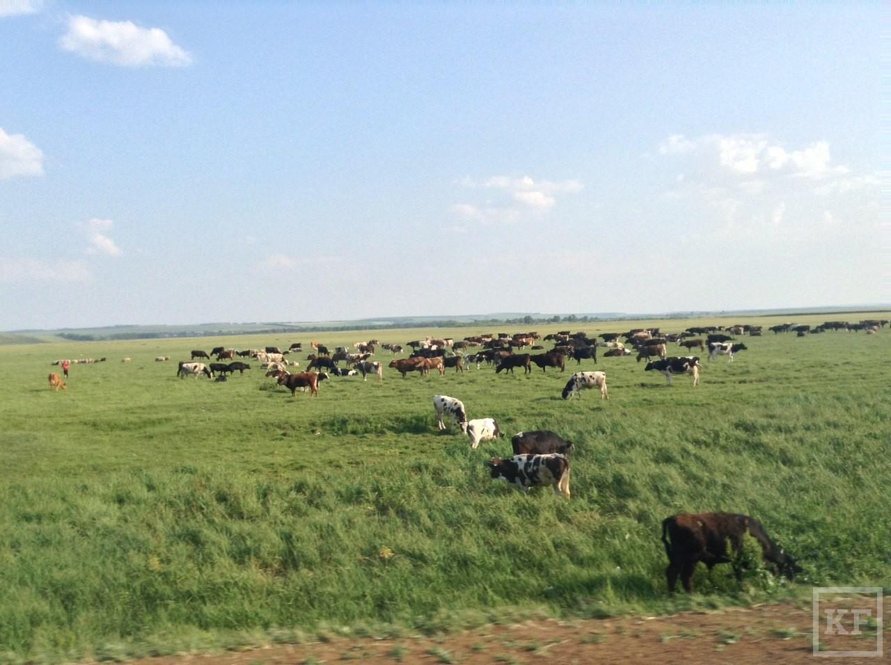 Впервые за растрату гранта фермеру из РТ грозит срок. Власти намерены впредь контролировать использование денег, выделенных аграриям