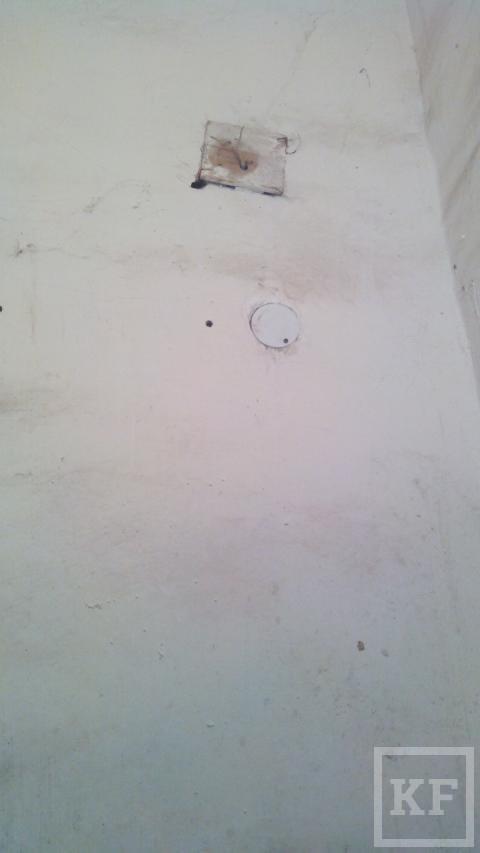 В одном из подъездов дома в Нижнекамске живут мыши — «Народный контроль»