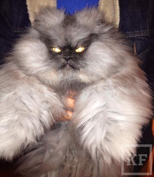 Скончался самый сердитый и пушистый кот в США