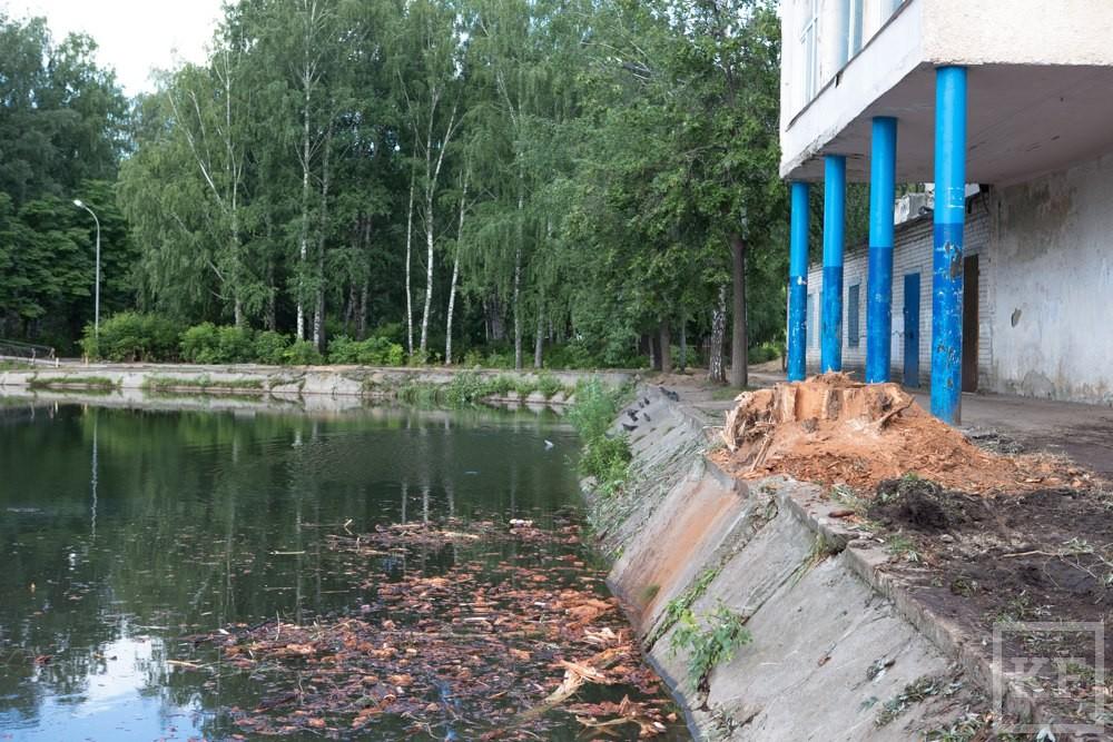 После вырубки деревьев в парке Урицкого прокуратура начала проверку