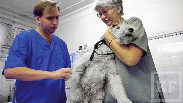 Страховщики планируют получить в Татарстане право поголовно чипировать и страховать домашних животных