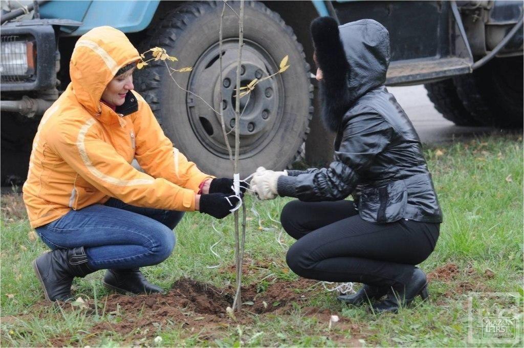 Дело не в экологии: почему в Нижнекамске погибли более 2 тысяч деревьев