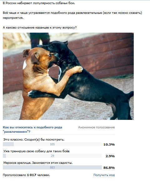 Собачьи бои. Когда в Казани?