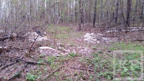 Жители Бугульмы жалуются на свалку в Зеленой роще