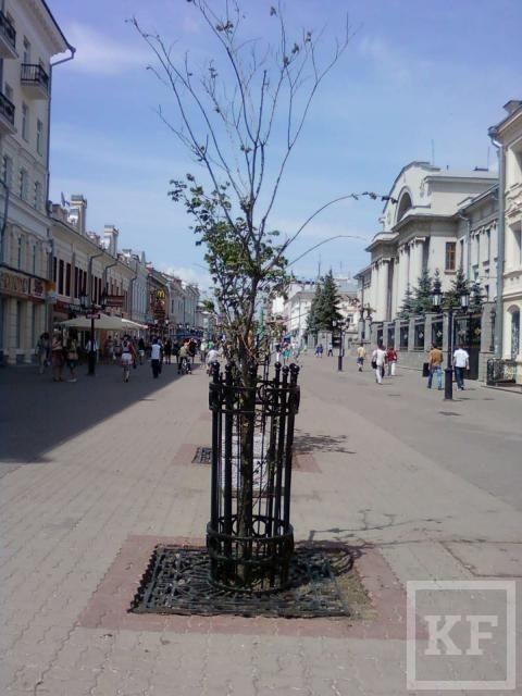 На Баумана высохли посаженные деревья [фото]