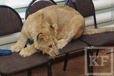 Поселившийся в челнинском зоопарке олененок успел съесть сосновый веник