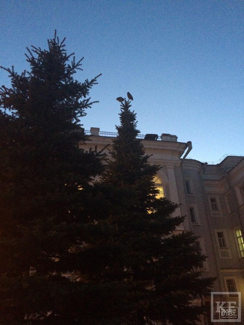 В сквере за главным зданием КФУ поселились совы, почти как в академии чародейства и волшебства Хогвартс