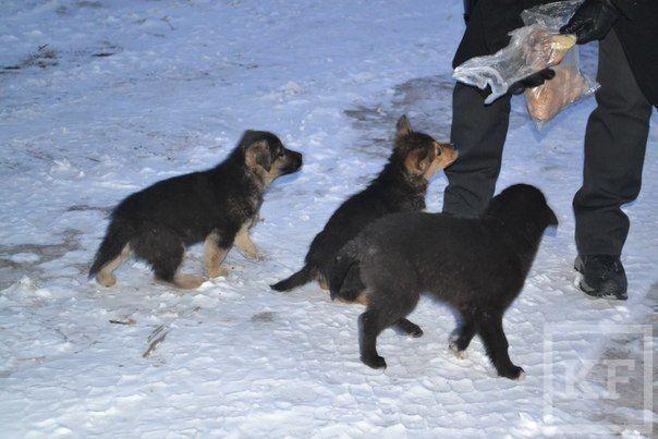 В Набережных Челнах 60 собак из приюта «Азира» могут остаться на улице