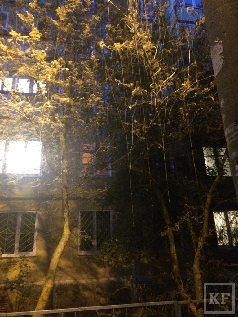Жители Казани жалуются на гусениц, объедающих деревья у подъездов домов и в садах
