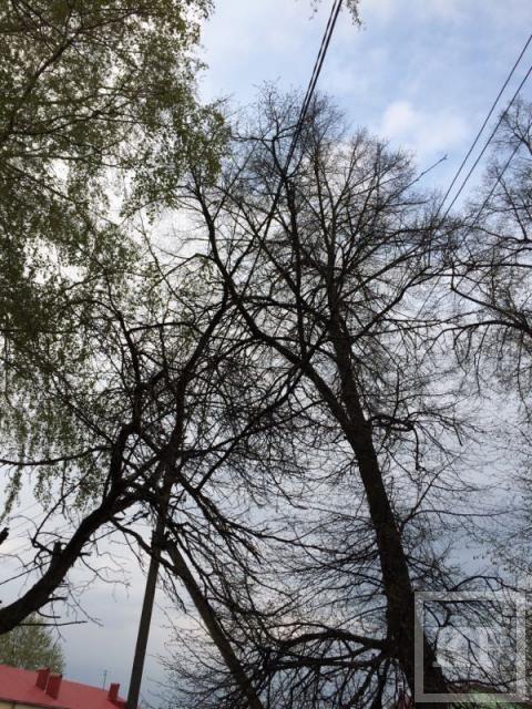 Житель Чистополя пожаловался на деревья, растущие около ЛЭП – «Народный контроль»