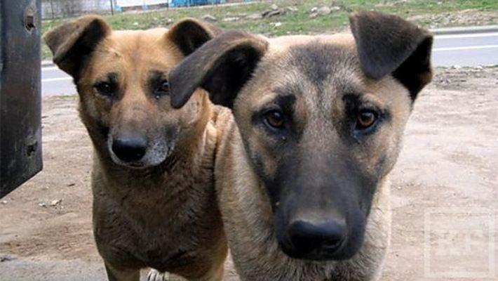 Бродячие собаки будут жить: в Челнах их отстрел и отлов запрещён