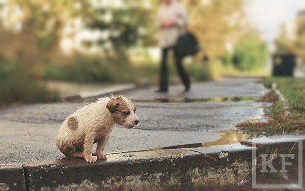 «Прошло уже пять месяцев, как начал работать «Центр по контролю за животными»,  но методы и результаты работы остаются прежними»