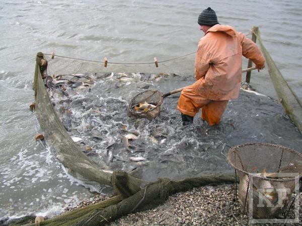 Татарстан тратит на госпрограммы сотни миллиардов рублей. В этом году стартуют еще две — поддержки рыбоводства и переселения соотечественников