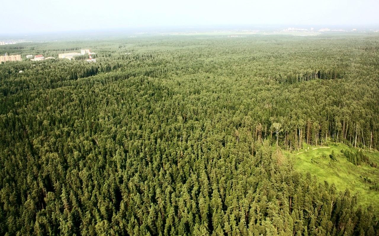 НаЗемле растет неменее триллиона деревьев— Ученые